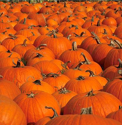 1. Pumpkins sea